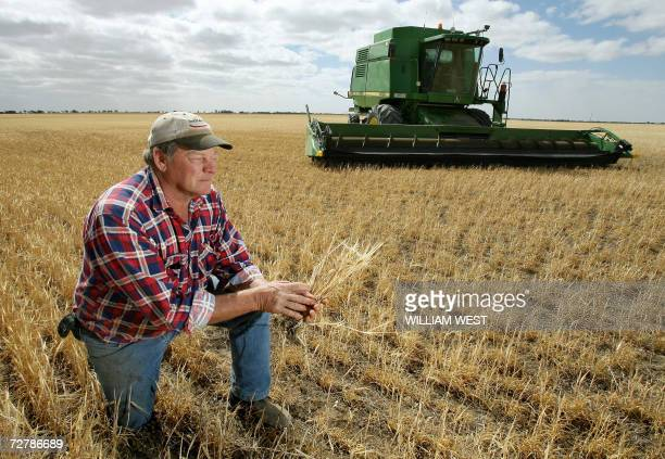 TO GO WITH Australiaclimatedroughtsuicide Farmer Marshall Rodda inspects his stunted wheat stalks normally thigh high and which have only managed...
