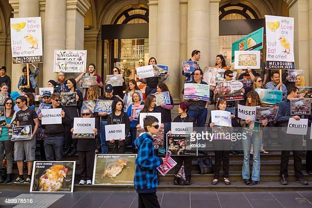 melbourne chicken save rally - dierenwelzijn stockfoto's en -beelden