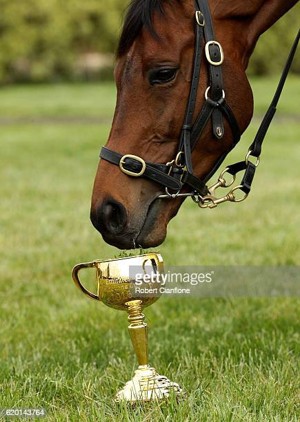 Melbourne Cup winner Almandin is paraded for the media at Macedon Lodge on November 2 2016 in Mount Macedon Australia