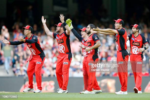 Melbourne Renegades players appeal to the umpire during the Big Bash League match between the Melbourne Renegades and the Hobart Hurricanes at Marvel...