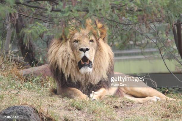 melbourne zoo... - melbourne zoo stock pictures, royalty-free photos & images