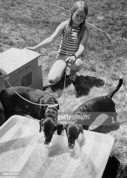Melissa Hedgpeth babysits teacher Carol Hamilton's dogs as they drink water out of wading pool provided because of the heat Credit Denver Post