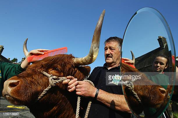 Melissa Sinclair livestock apprentice and Matt Auld stockman, prepare seven year old Maisie the Highland cow ahead of the International Highland...