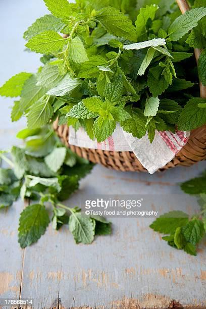 Melissa tea herb