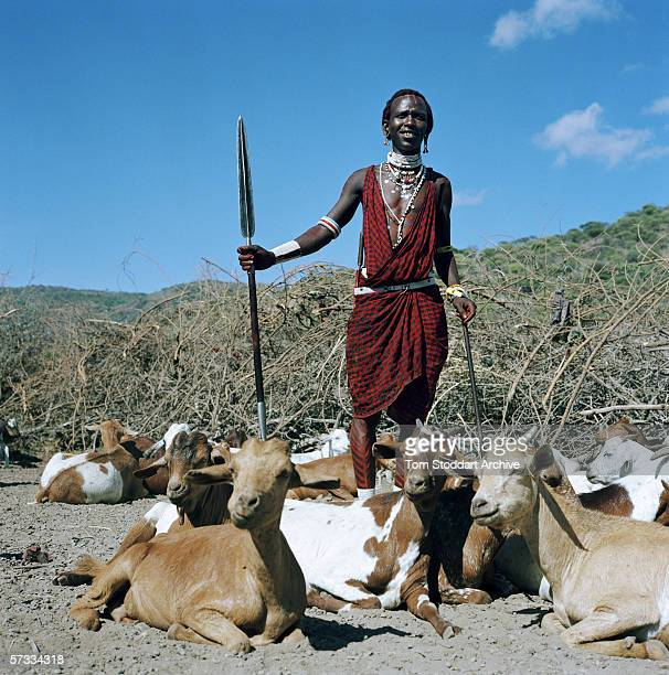 Melita Olmingani a young Maasai warrior with his herd of goats in the Malambo district of Ngorongoro The region of Ngorongoro in Tanzania is one of...