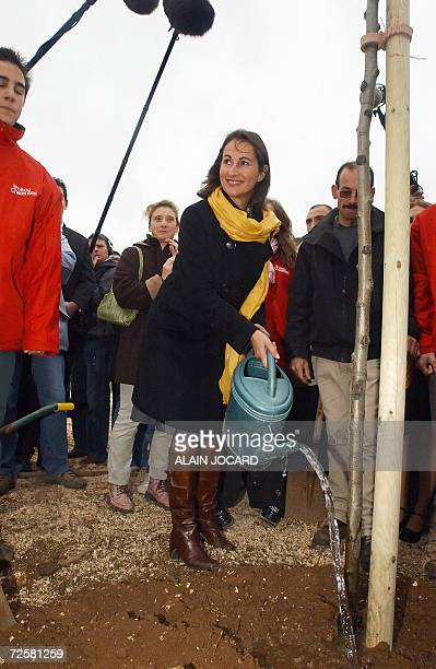 Segolene Royal one of the three candidates for the Socialist nomination in the 2007 French presidential race plants a tree during the ceremony for...