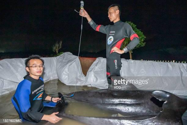 Melon-headed whale receives saline injection at Hongye fish farm on July 6, 2021 in Taizhou, Zhejiang Province of China. Nine melon-headed whales...