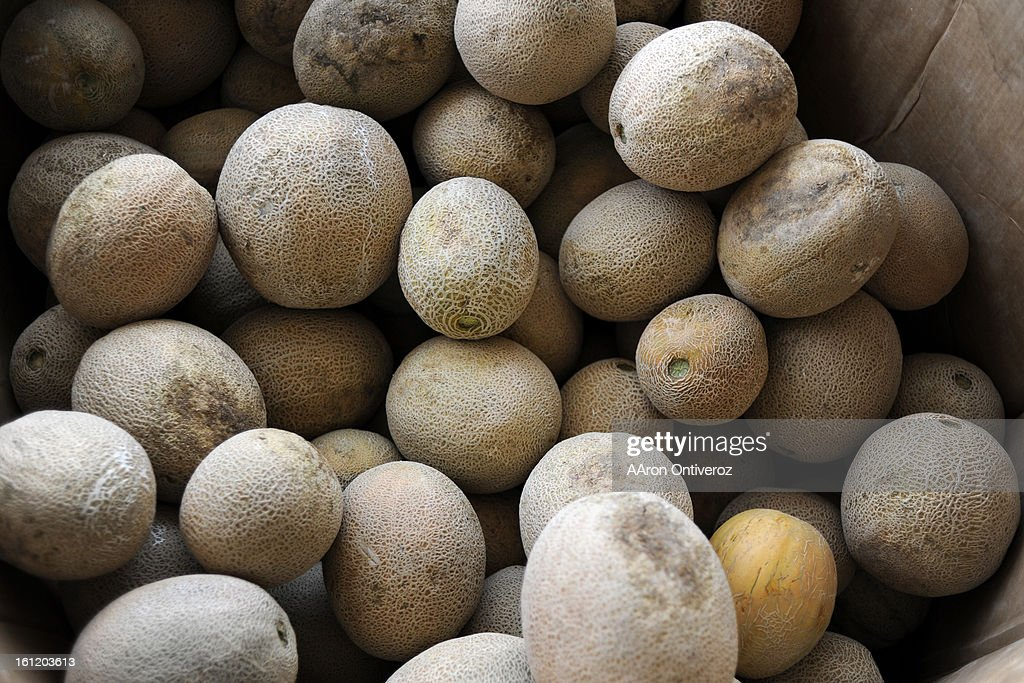 Melons sit in a bin at Smith Farms Market on Wednesday, October 5, 2011. The listeria breakout in cantaloupe that has killed 18 people originated at Jensen Farms, which is in Holley located 90 miles away from Rocky Ford. Many people believed that all of t : News Photo