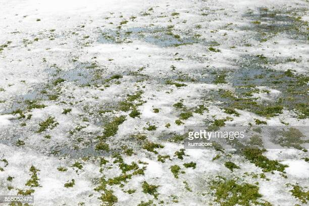 Melted snow on field
