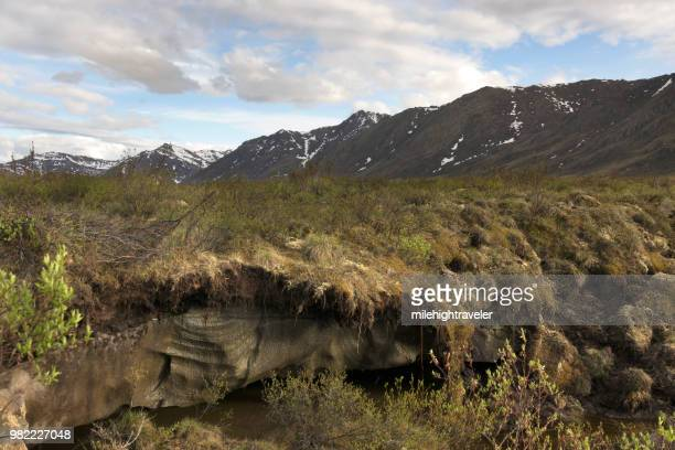 melting ice permafrost near dempster highway subarctic tundra tombstone territorial park yukon - permafrost stock pictures, royalty-free photos & images
