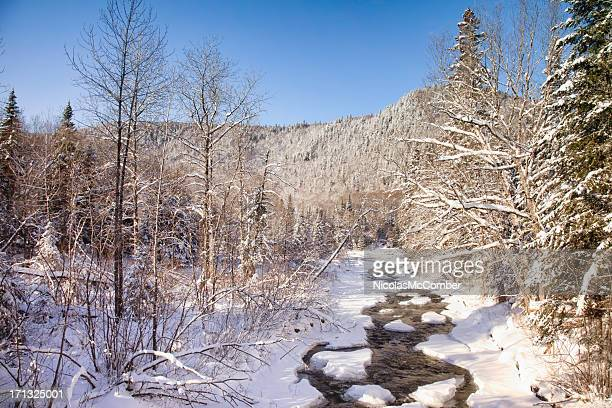 Melting River in wintry forest
