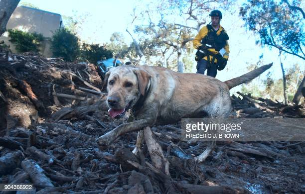 A member of a search and rescue team and his search dog sift through debris looking for victims on a property in Montecito California on January 12...