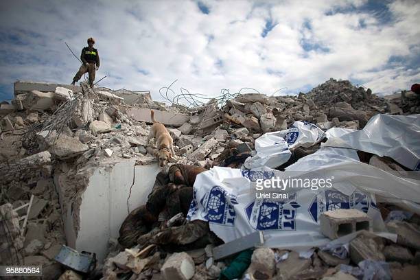 A member of an Israeli rescue team and a dog search through a pile of dead bodies for survivors at the GOC university on January 19 2010 in...