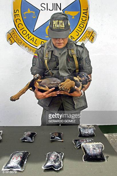A member of Colombia's National Police holds during a press conference in Medellin 04 January 2005 a puppy in whose stomach two bags containing...