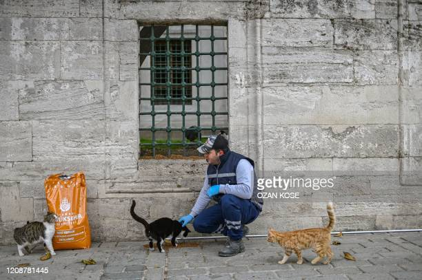 Member of Istanbul Metropolitan municipality feeds stray cats near empty Hagia Sophia square in Istanbul on April 1, 2020 after Turkish officials...