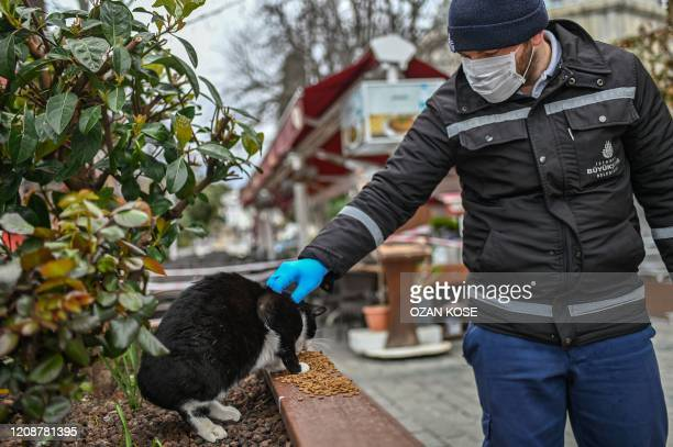 Member of Istanbul Metropolitan municipality pets a stray cat during a food ditribution near empty Hagia Sophia square on April 1, 2020 in Istanbul...