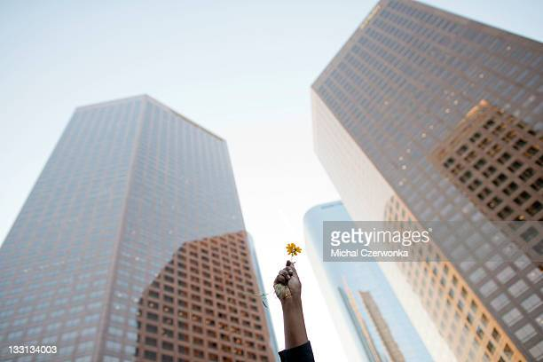 A member of Occupy LA holds a flower in the air near Bank of America downtown on November 17 2011 in Los Angeles California The protest was part of a...