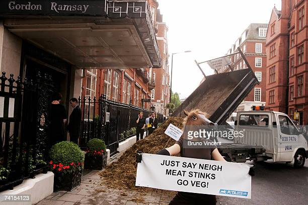 A member of People for the Ethical Treatment of Animals protests by a tonne of horse manure outside of Gordon Ramsay's restaurant in Claridges Hotel...