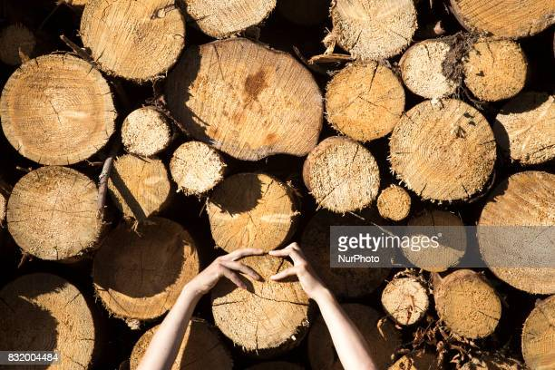Member of quotCamp for forestquot organization embraces a cutted down treestands near illegal logging during event near illegal logging near...