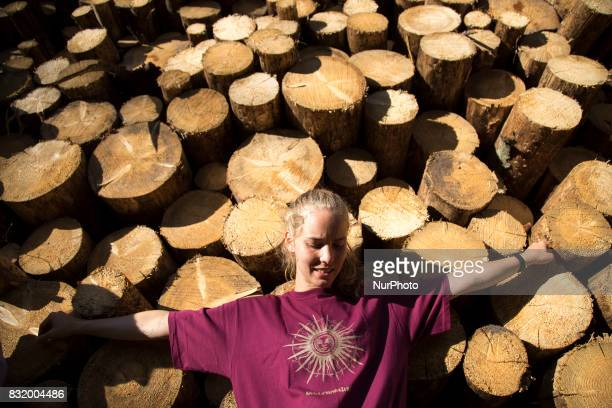 Member of quotCamp for forestquot organization stand near illegal logging during event near illegal logging near Bialowieza on August 15 2017