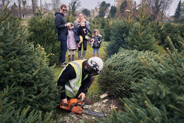 GBR: Cambridge Christmas Tree Experience