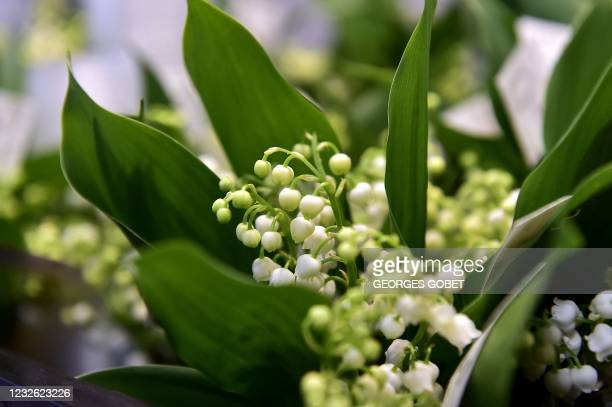 Member of staff offers a sprig of Lily of the Valley or Muguet to a resident of the Henri IV retirement home in Toulouse, southern France, a...