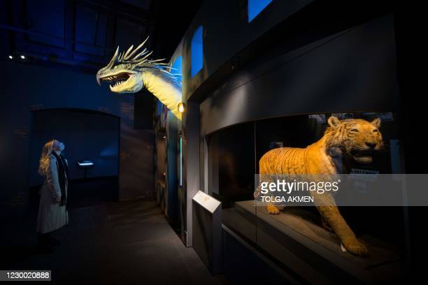 Member of staff poses with a prop of a Hungarian Horntail dragon made for the Fantastic Beasts film series at the press view of Fantastic Beasts: The...