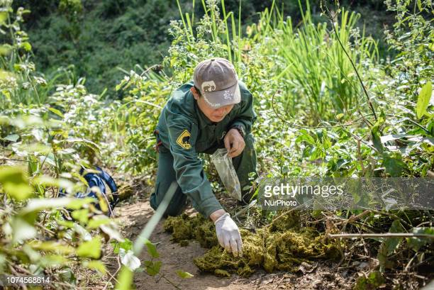 A member of staff takes the elephant's excrement for analysis in the Elephant Conservation Center Sayaboury Laos in December 2018 Laos was known as...