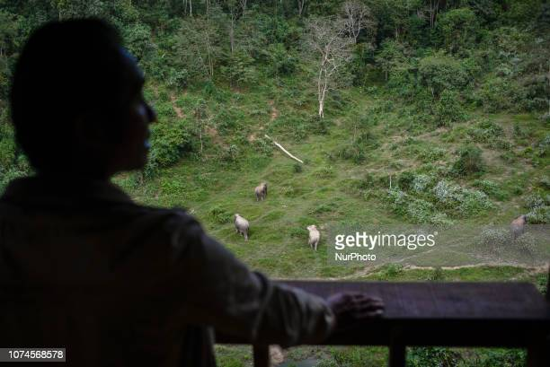A member of staff watches the elephants in Socialization Area from observation point in the Elephant Conservation Center Sayaboury Laos in December...