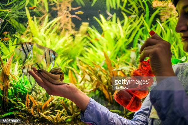 A member of staff watering snails during the Exhibition of Giant African Snails on November 2 2017 in Kiev Ukraine