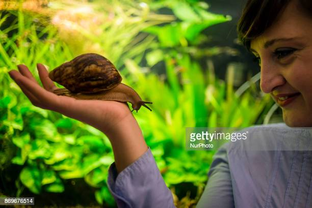 A member of staff with snails during the Exhibition of Giant African Snails on November 2 2017 in Kiev Ukraine