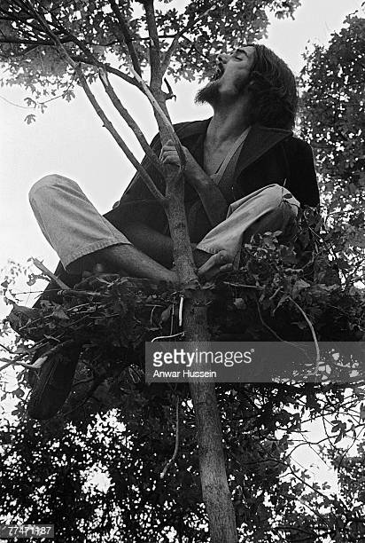 Member of the audience perches in a large nest atop a tree, at the Isle of Wight Festival in Wootton, 30th/31st August 1969.