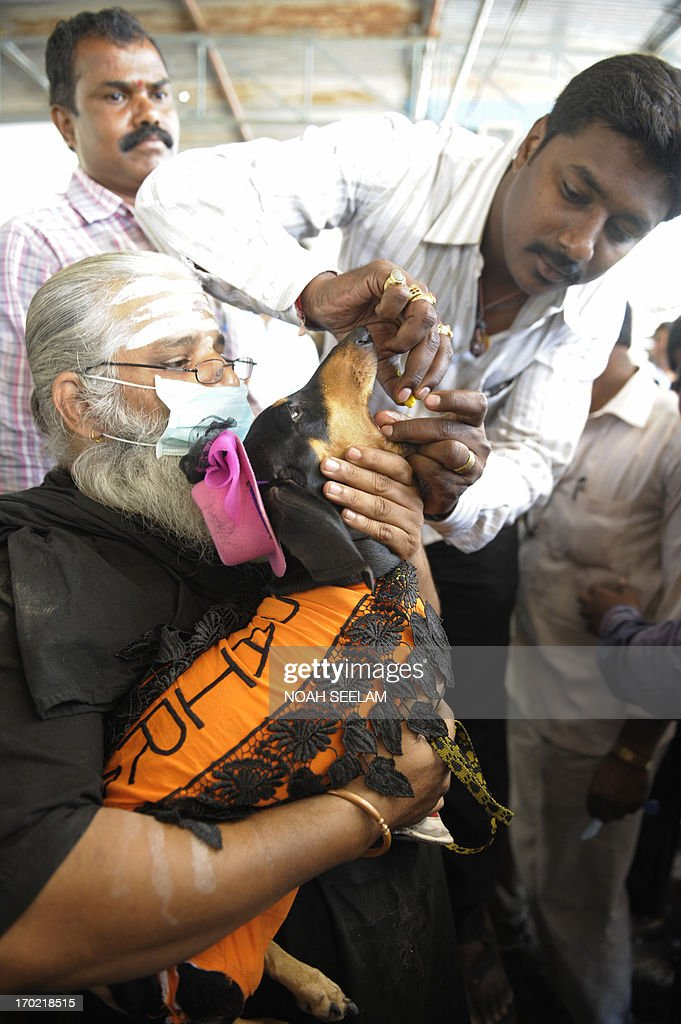 A member of the Bathini Goud family administers 'fish medicine' to a pet dog named Savitri at the Nampally Exhibition Grounds in Hyderabad on June 9, 2013. The medicine, which has been offered by the family of the southern Indian city to patients for the last 162 years as a cure for asthma and other breathing disorders, is placed in the mouth of a live murrel fish and then slipped into the mouth of the patient. The medicine is administered on the auspicious day of 'Mrigasira Karti' which falls in June with the onset of the annual monsoon. The treatment, which is based on a secret herb formula, draws thousands of people from all over the country. AFP PHOTO / Noah SEELAM