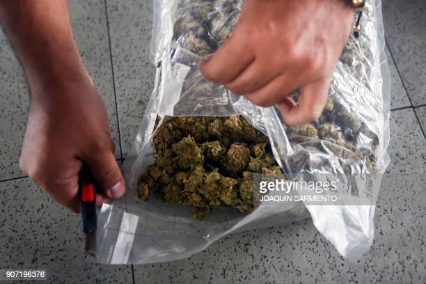 A member of the Colombian Technical Investigation Unit shows a package of seized marijuana on January 19 in Medellin Colombia 11 tons of marijuana...