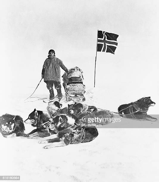 A member of the fiveman Antarctic expedition team led by Roald Amundsen poses with sled dogs during the journey to the South Pole in 1911 The team...