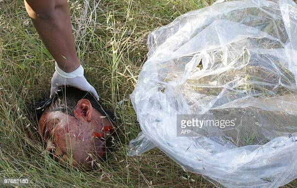 A member of the forensic departament lifts a human head to put it in a bag in Acapulco Guerrero state Mexico on March 13 2010 13 people including...