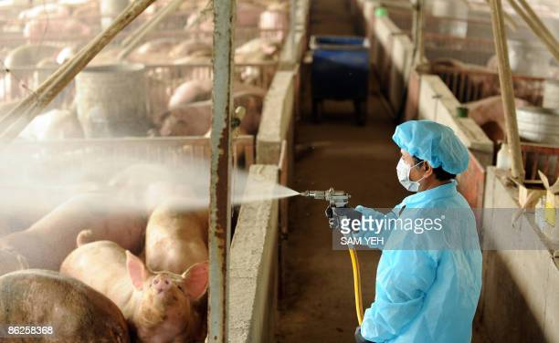 Member of the government's animal disease department works to disinfect a pig farm as a precaution in Hsichiou, Changhua county, in central Taiwan on...