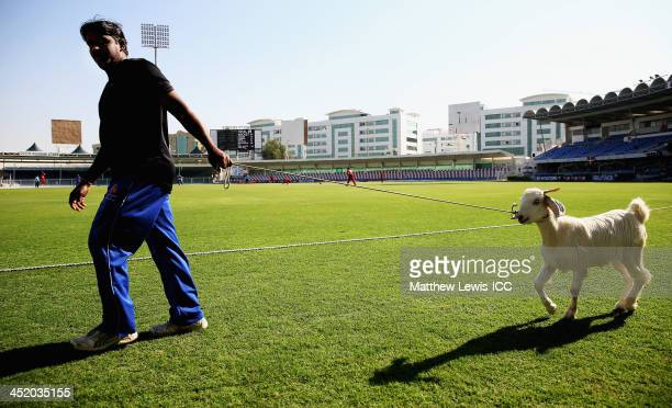 A member of the groundstaff leads a goat round the boundary during the ICC World Twenty20 Qualifier 15th Place Playoff between Denmark and USA at the...