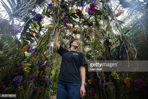A member of the horticultural team poses in an archway of Vanda orchids during a press preview of the Thai Orchid Festival at Kew Gardens on February...