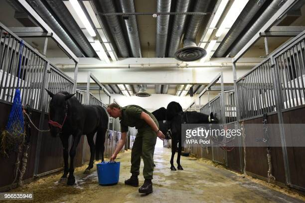 A member of the Household Calvary grooms horses in the Stable Lines during a preview to see The Household Cavalry Mounted Regiment preparations for...