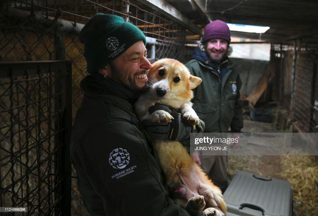 SKOREA-SOCIAL-ANIMAL-DOG : News Photo