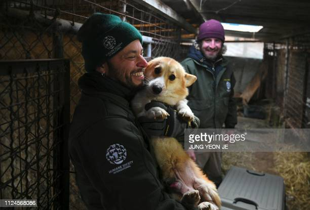 A member of the Humane Society International carries a dog from a cage to a crate for transport at a dog farm during a rescue event involving the...