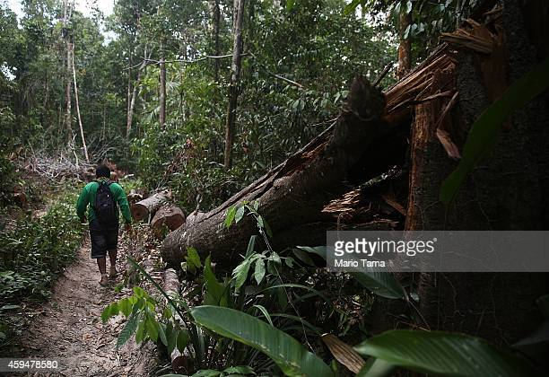 KA'APOR INDIGENOUS RESERVE BRAZIL NOVEMBER 23 A member of the Ka'apor indigenous tribe walks while searching for a suspected illegal logger on their...