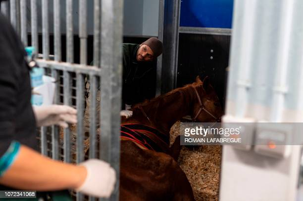 A member of the medical staff from the equine clinical unit 'Clinequine' provides care to a horse on November 20 in MarcyL'Etoile near Lyon...