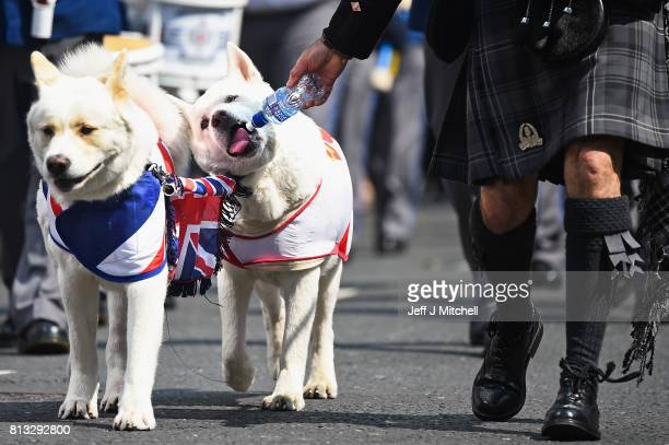 A member of the Orange Order gives his dogs a drink as they take part in the Twelfth of July parade on July 12 2017 in Belfast Northern Ireland The...