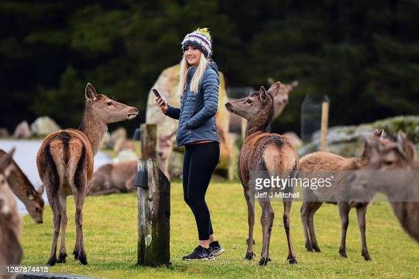 Member of the public take pictures on her phone of re deer grazing in the Highlands on November 26, 2020 in Glen Coe, Scotland. Britain's largest...