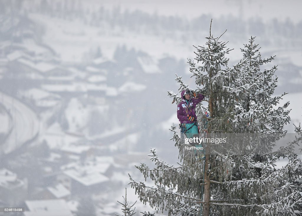 A member of the public takes a selfie when watching the race from a very tall tree, duering the famous Hahnenkamm course, the men's Downhill, at the FIS SKI World Cup in Kitzbuehel. 24 January 2015, Picture by: Artur Widak/NurPhoto
