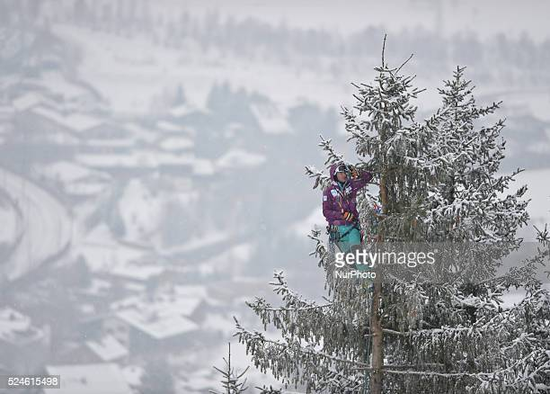 A member of the public takes a selfie when watching the race from a very tall tree duering the famous Hahnenkamm course the men's Downhill at the FIS...