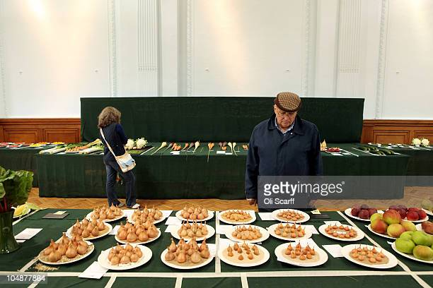 A member of the public views the finalist onions at the Royal Horticultural Society's London Autumn Harvest Show on October 6 2010 in London England...