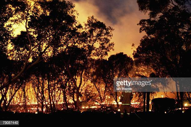 A member of the Rural Fire Service tends to backburning as a large bushfire sweeps through Kuringgai Chase National Park North of Sydney January 21...